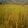 Coltivazione: la produzione di CANAPA